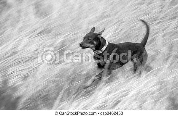 Race the Wind - csp0462458