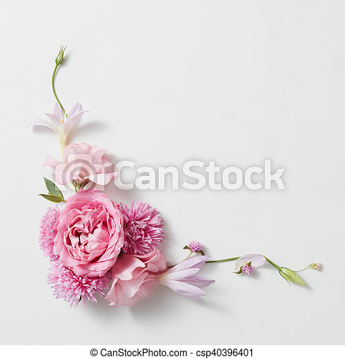 Rahmen, blumen, weißer hintergrund. Rosa, raum,... Stockfotografie ...
