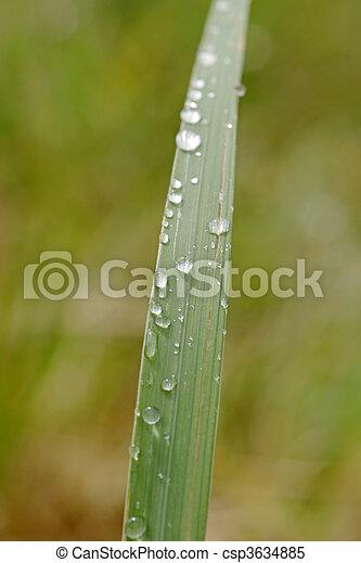grass blade close up. Rain Dops On Grass Blade Stock Photo Close Up