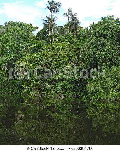 Rain forest in Amazon - csp6384760