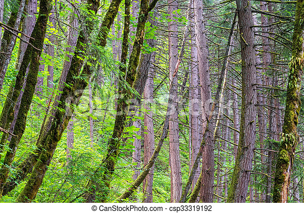 Rain Forest in Oregon - csp33319192