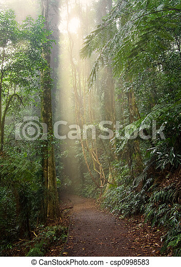 rain forest light - csp0998583