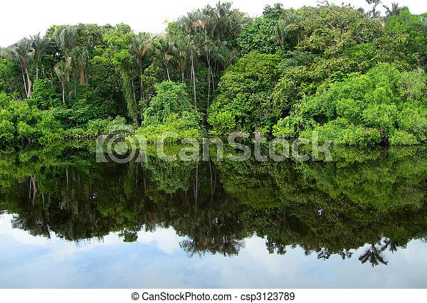 Rain Forest mirrored in a lagoon            - csp3123789