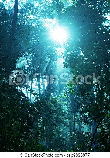 Rain forest - csp9836877