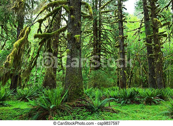 Rain forest - csp9837597