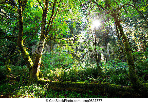Rain forest - csp9837877