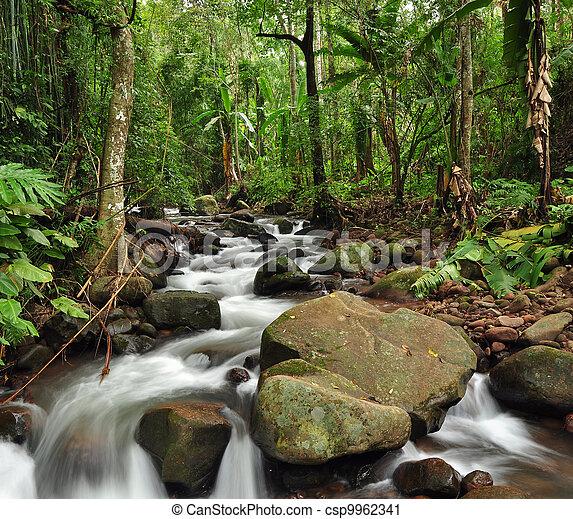 Rain forest - csp9962341