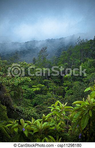 Rain Forest - csp11298180