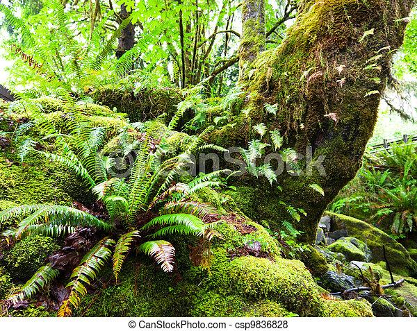 Rain forest - csp9836828