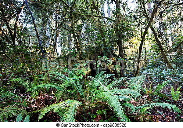 Rain forest - csp9838528
