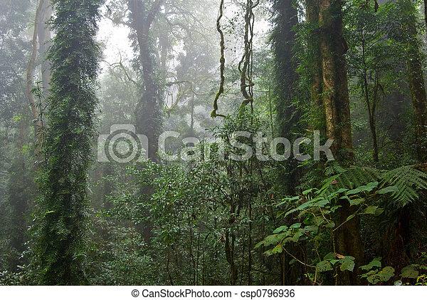 rain forest - csp0796936