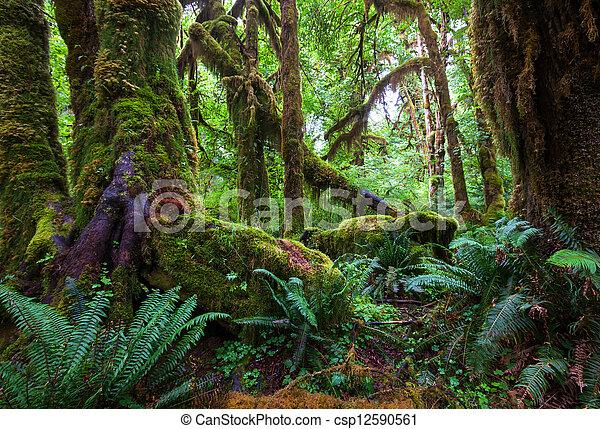 Rain forest - csp12590561