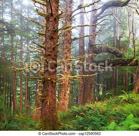 Rain forest - csp12590563