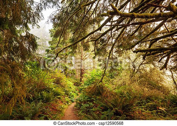 Rain forest - csp12590568