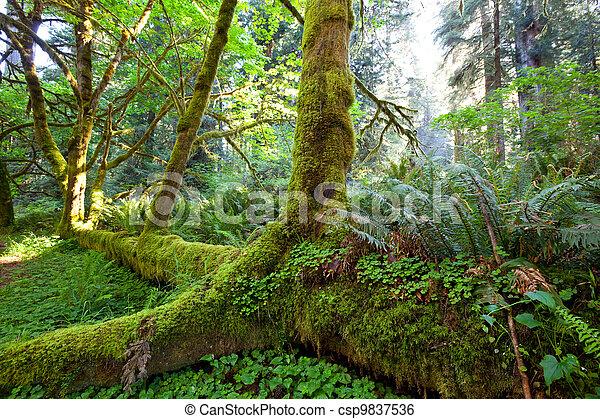 Rain forest - csp9837536