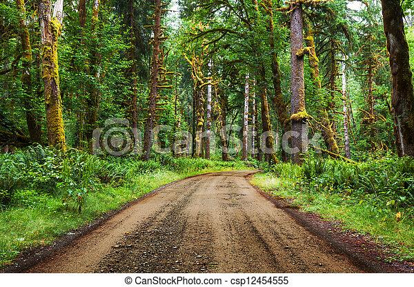 Rain forest - csp12454555