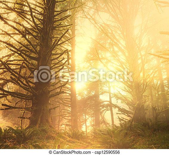 Rain forest - csp12590556