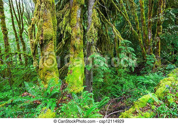 Rain forest - csp12114929