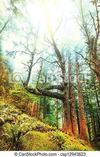 Rain forest - csp12943623
