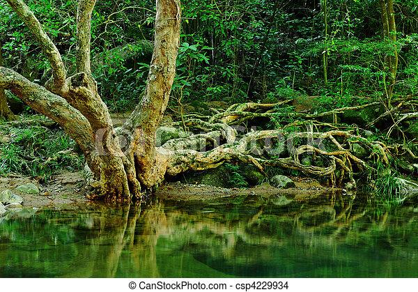 rain forest - csp4229934