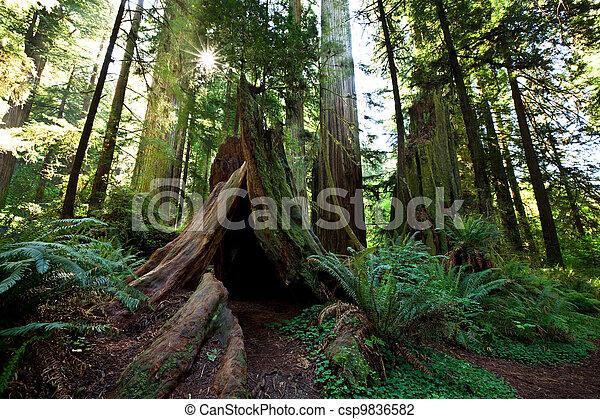 Rain forest - csp9836582
