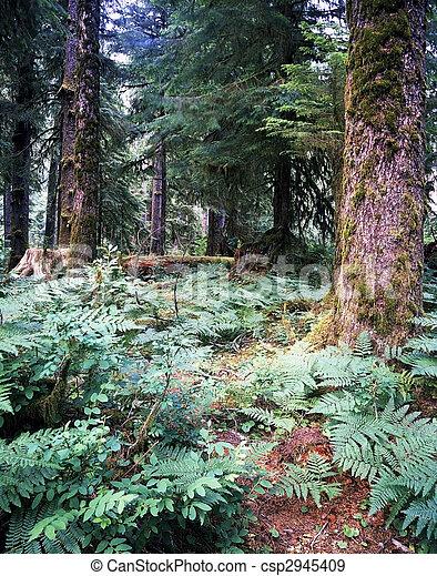 Rain Forest - csp2945409