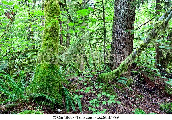 Rain forest - csp9837799