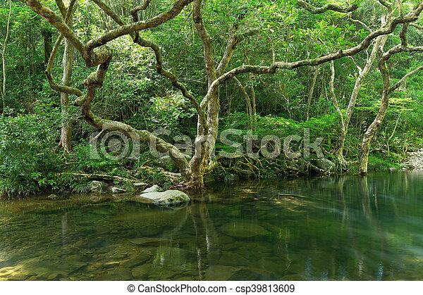Rain forest - csp39813609