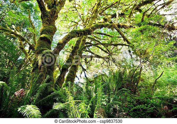 Rain forest - csp9837530