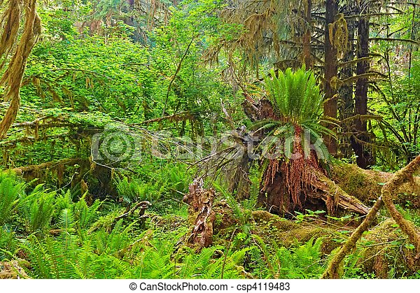 Rain Forest - csp4119483