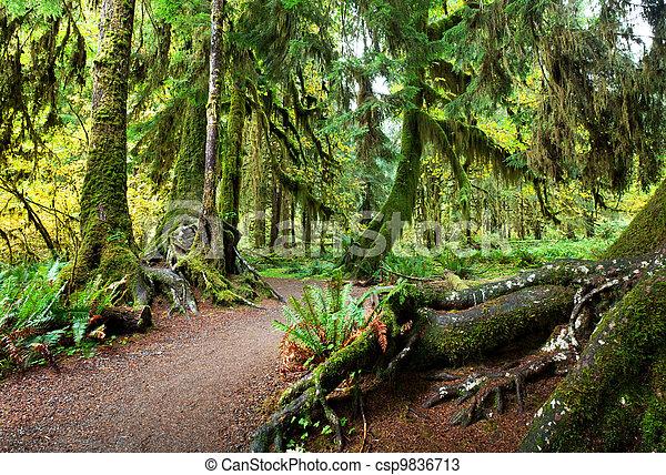 Rain forest - csp9836713