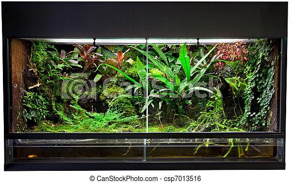 rain forest terrarium - csp7013516