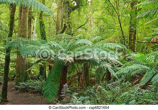 rain forest, Victoria, Australia - csp6821654