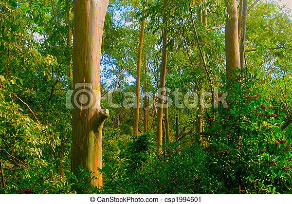 rainbow eucalyptus trees a group of colorful rainbow eucalyptus