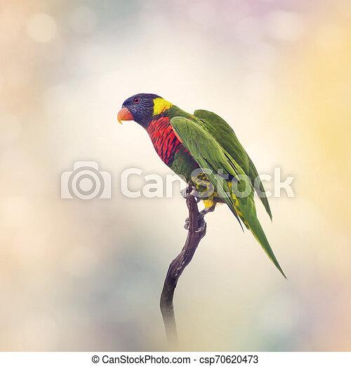 Rainbow Lorikeet on a branch - csp70620473