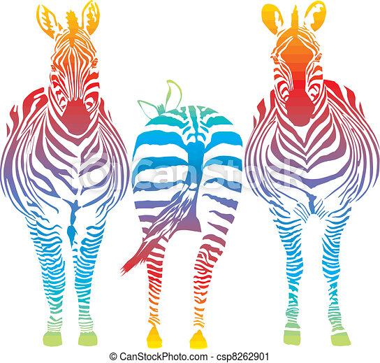 rainbow zebra - csp8262901