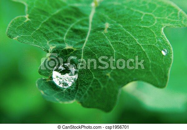 Raindrop - csp1956701