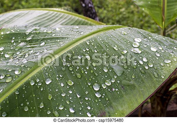 Raindrop - csp15975480
