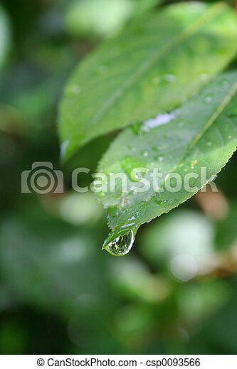 Raindrop - csp0093566