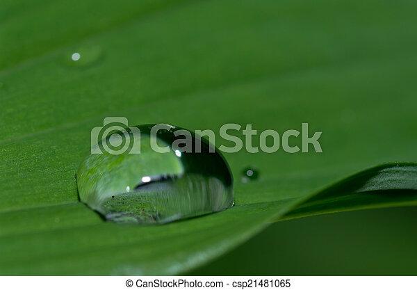 Raindrop - csp21481065