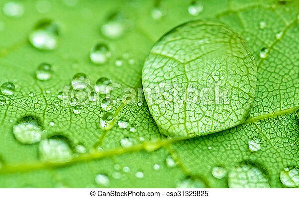 Raindrop - csp31329825
