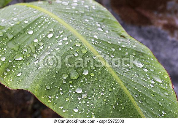 Raindrop - csp15975500