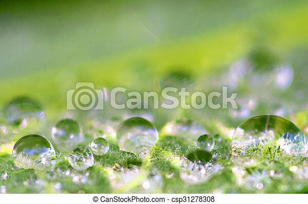 raindrop - csp31278308
