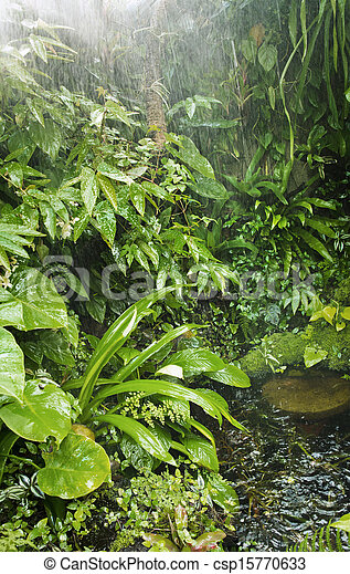 rainforest background rain in tropical forest