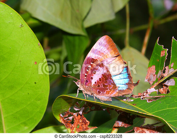 Rainforest Butterfly in Queensland - csp8233328