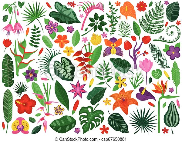 Rainforest Flowers And Leaves Collection Tropical Rainforest Plants Set Cartoon Exotic Flowers And Leaves With Floral Canstock A wide variety of tropical rainforest options are available to you, such as project solution capability, marble type, and design style. https www canstockphoto com rainforest flowers and leaves collection 67650881 html