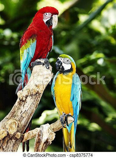 rainforest., grün, zwei, papagai - csp8375774