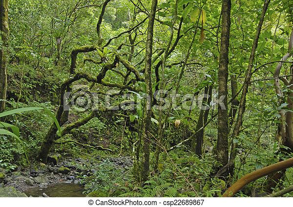 La selva tropical en Maui, Hawaii - csp22689867