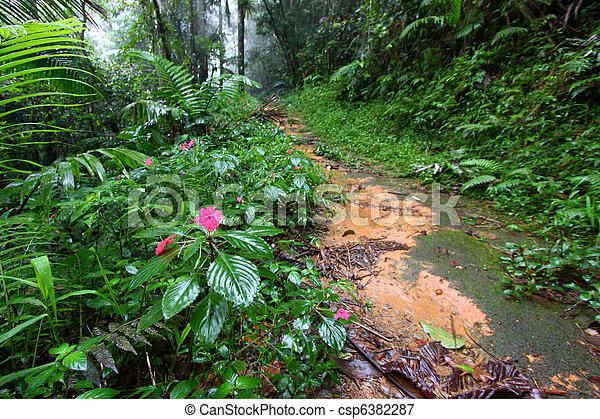 Rainforest Path - Puerto Rico - csp6382287