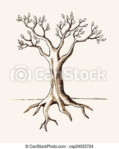 raiz árvore - csp24033724
